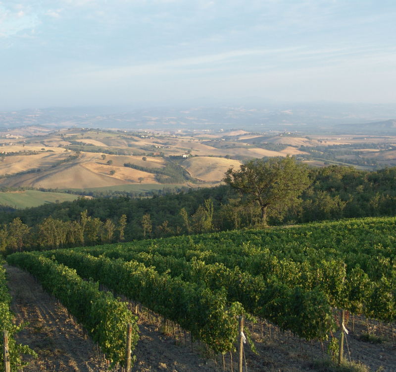 Basile Vignes1